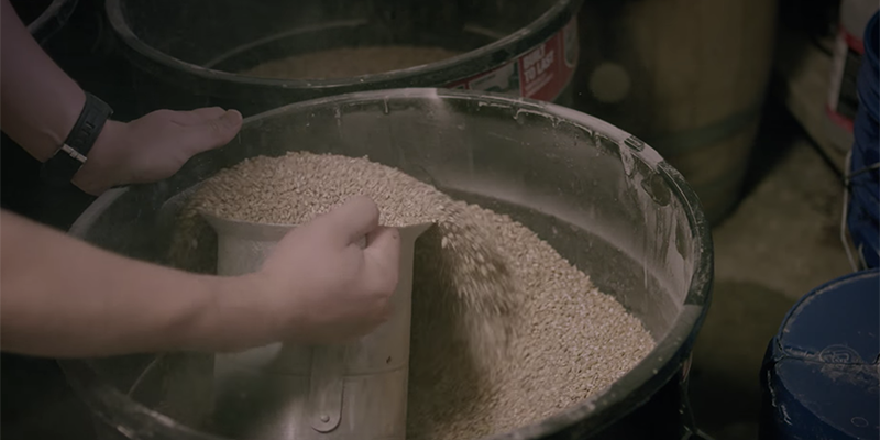 Malt being scooped from a bin before brewing